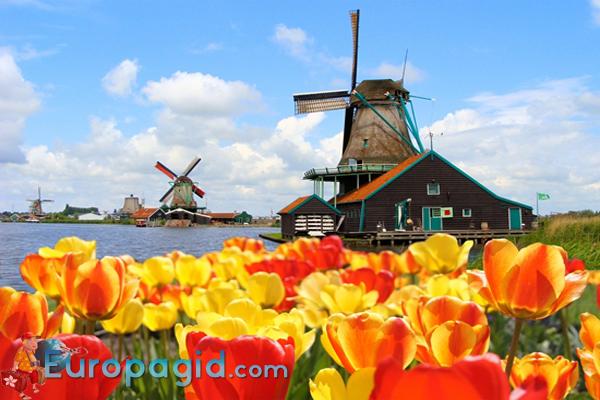 цветочные сувениры из Амстердама для Вас