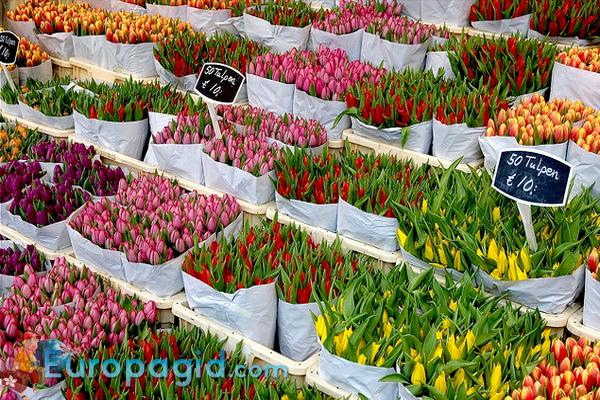 цветочные сувениры из Амстердама любимым