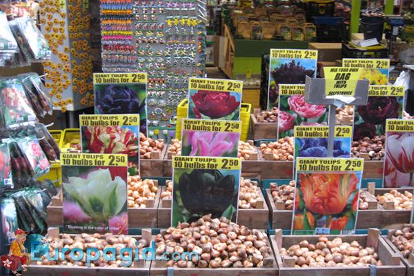цветочные сувениры из Амстердама