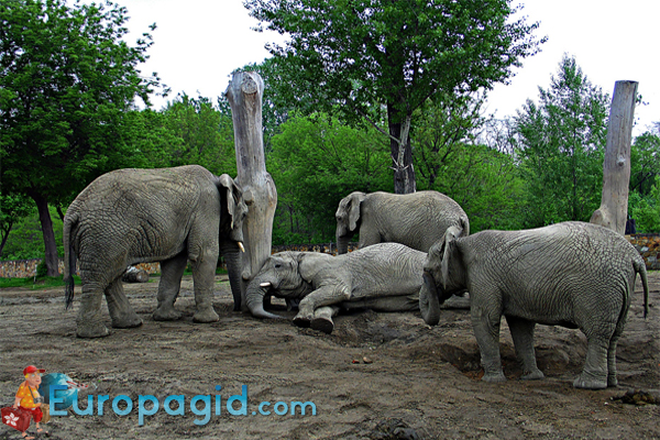 зоопарк Варшавы цена билетов для детей
