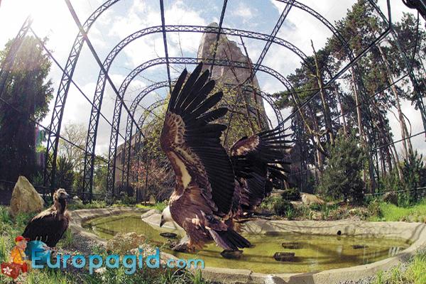 Венсенский зоопарк Парижа для всей семьи