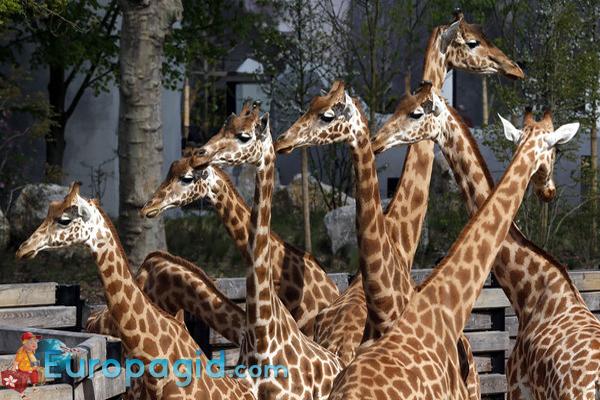 Зоопарк Парижа для всех