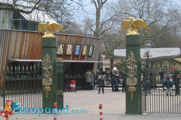 зоопарк Артис в Амстердаме как добраться