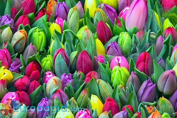 Плавучий цветочный рынок Bloemenmarkt
