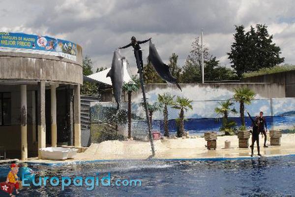 зоопарк в Мадриде для вас