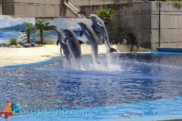 зоопарк в Мадриде для всех