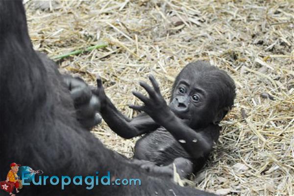 Лондонский зоопарк малыши