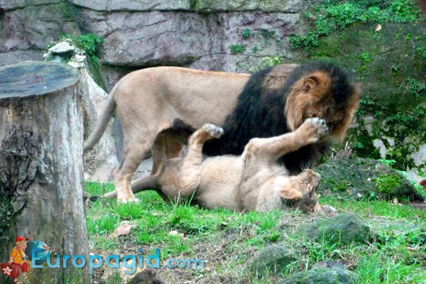Римский зоопарк для всех