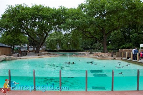 зоопарк Лондона для вас