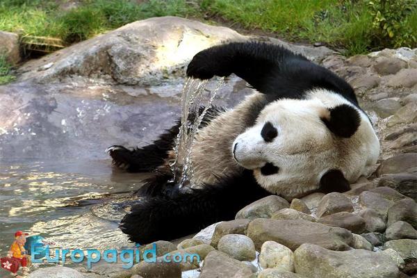 Эдинбургский зоопарк как добраться