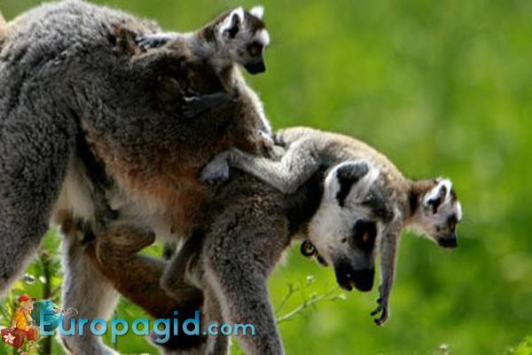 Зоопарк Attica Zoological Park для всех